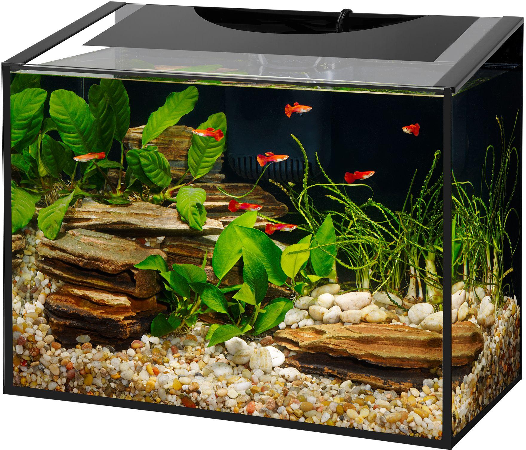 Aqueon Ascent LED Frameless Aquarium Kit 10 Gallon ... 10 Gallon Home Aquariums